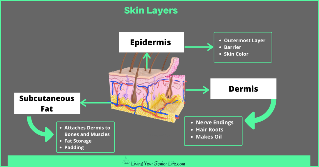 What is Aging Skin? - Skin Layers
